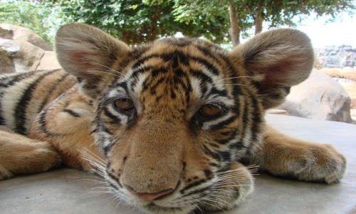 Zdjecie TAJLANDIA / Kanchanaburii / Canion Tygrysów  / Syjamska Dzungla i Swiątynie Angkoru