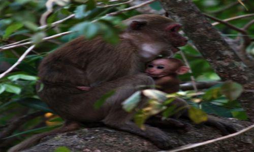 Zdjęcie TAJLANDIA / park Narodowy Erewan / Bangkok / pora karmienia....