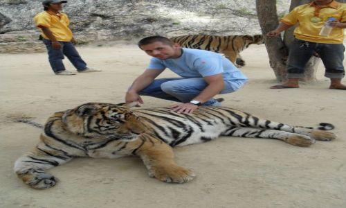 Zdjecie TAJLANDIA / - / Tiger Temple / Tygrysek