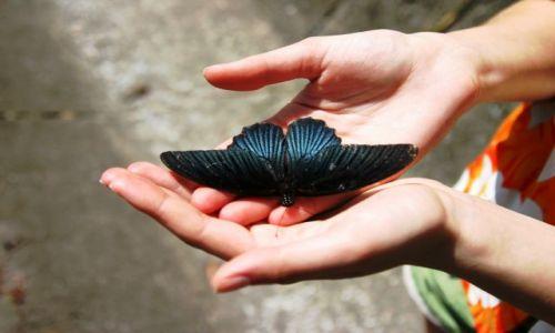 Zdjecie TAJLANDIA / - / Koh Samui / Butterfly effect