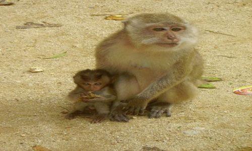 Zdjecie TAJLANDIA / południowa Tajlandia / jaskinia Monkey Cave Temple / makaki z Monkey Cave Temple