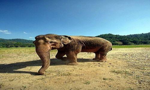 Zdjęcie TAJLANDIA / Chiang Mai / Elephant Nature Park / Wreszcie szczęśliwy