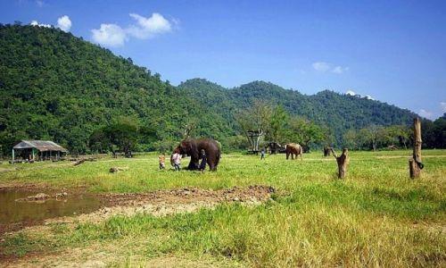 Zdjęcie TAJLANDIA / Chiang Mai / Elephant Nature Park / Schronisko dla słoni
