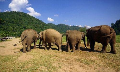 Zdjęcie TAJLANDIA / Chiang Mai / Elephant Nature Park / Mamy Państwa w głębokim poważaniu :)
