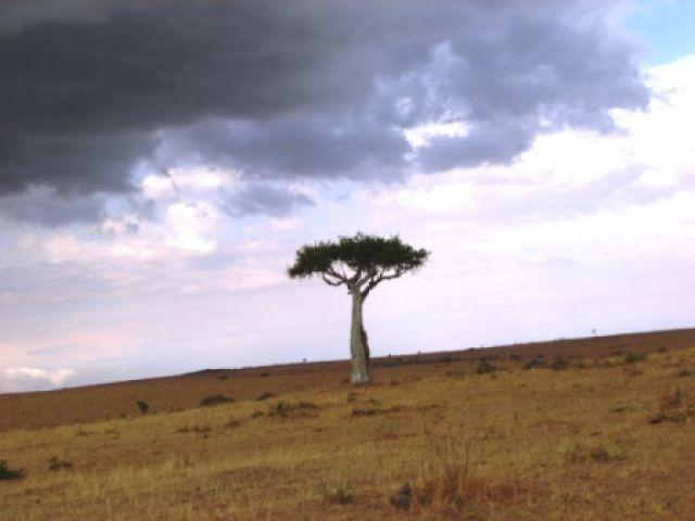 Zdj�cia: Serengeti, sawanna, TANZANIA
