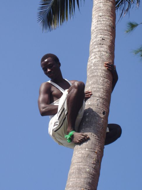 Zdjęcia: plaża w Uroa, Zanzibar, Wspinaczka na palmę, TANZANIA