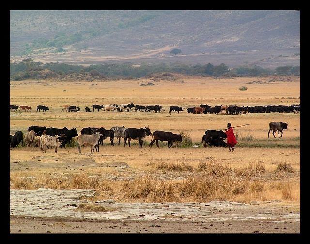 Zdjęcia: krater Ngorongoro, północna Tanzania, Życie Masajów w Ngorongoro1, TANZANIA