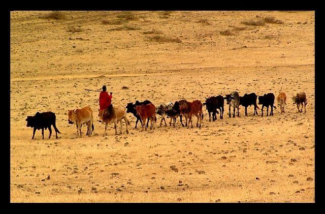 Zdjęcia: krater Ngorongoro, północna Tanzania, Życie Masajów w Ngorongoro2, TANZANIA