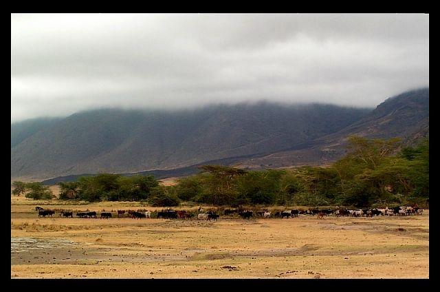 Zdjęcia: krater Ngorongoro, północna Tanzania, Mgła w kraterze..., TANZANIA