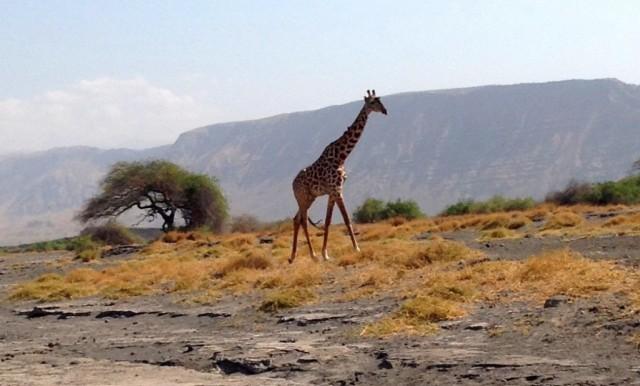 Zdjęcia: Tanzania, Tanzania, Kili35, TANZANIA