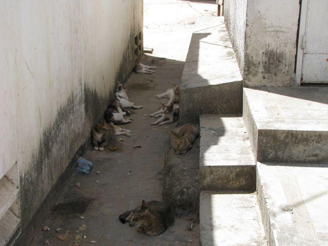 Zdjęcia: Stone Town, Afryka, Zanzibar, Ulica kotów, TANZANIA