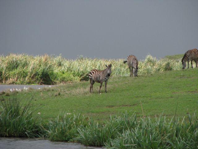 Zdj�cia: Krater Ngorongoro, Afryka,, Przed burz�, TANZANIA