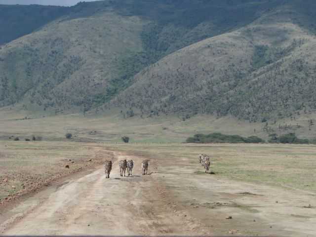 Zdjęcia: Ngorongoro, Afryka,, Poszły sobie, TANZANIA