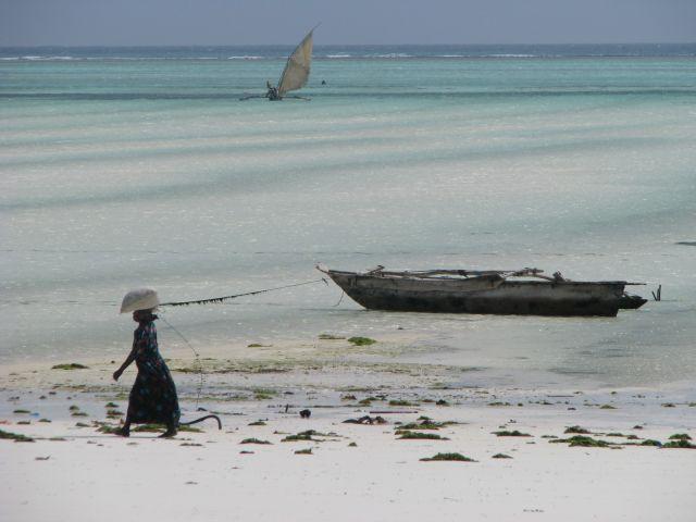 Zdjęcia: Zanzibar wschodnie wybrzeże, Afryka, Plaża Paje, TANZANIA