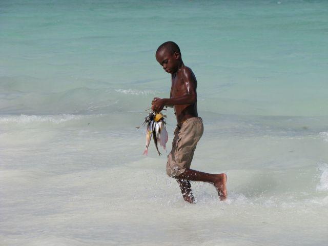 Zdjęcia: Zanzibar wschodnie wybrzeże, Afryka, Kilka różnych ryb, TANZANIA