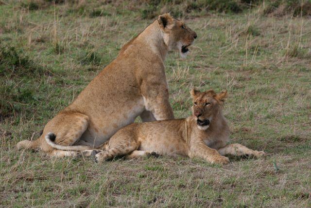 Zdjęcia: Tarangire NP, wszyscy lubią jeść..., TANZANIA