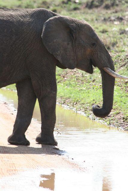 Zdjęcia: Tarangire NP, dziurawy baobab, TANZANIA