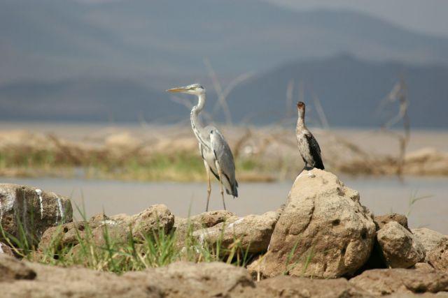 Zdj�cia: przy wyje�dzie z Ngorongoro, barwy ochronne, TANZANIA