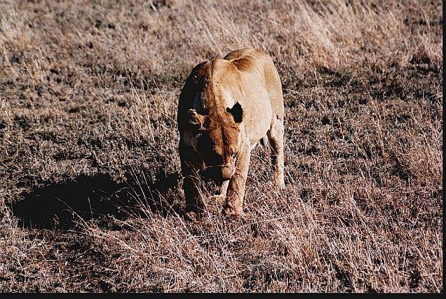 Zdjęcia: P.N. Serengeti, afrykańskie portrety 4, TANZANIA
