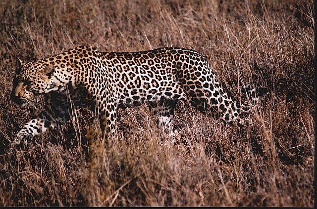 Zdjęcia: P.N. Serengeti, afrykańskie portrety 5, TANZANIA