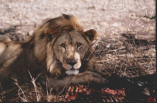 Zdj�cia: P.N. Serengeti, afryka�skie portrety 6, TANZANIA