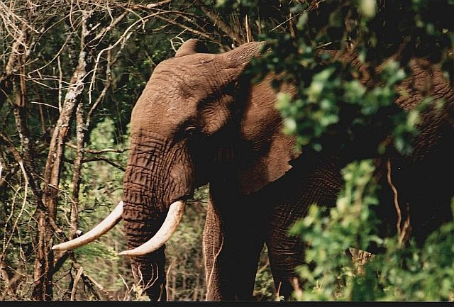 Zdjęcia: camping Simba , -Ngorongoro, afrykańskie portrety 10, TANZANIA