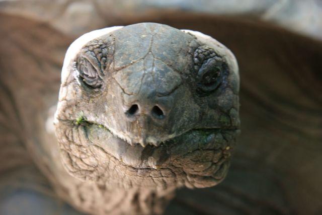 Zdjęcia: Zanzibar, żółw olbrzym, TANZANIA