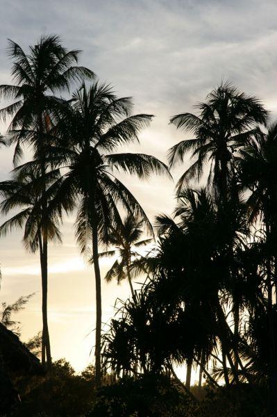 Zdjęcia: Zanzibar, zachodzi słoneczko..., TANZANIA
