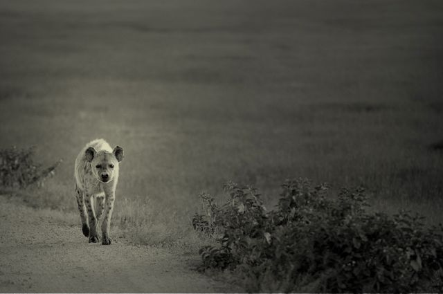 Zdjęcia: Afryka, Serengeti, *** , TANZANIA