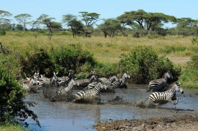 Zdjęcia: Afryka, Serengeti, ***, TANZANIA