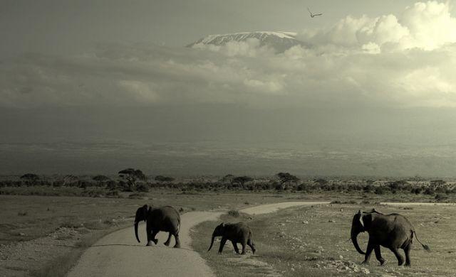 Zdj�cia: pod  Kilimand�aro, ***, TANZANIA
