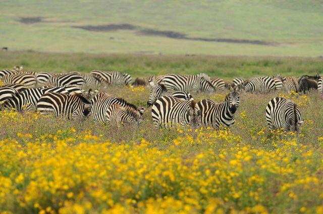 Zdjęcia: Ngrongoro, Północna Tanzania, ***, TANZANIA