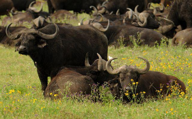 Zdj�cia: Ngorongoro, P�nocna Tanzania, ***, TANZANIA