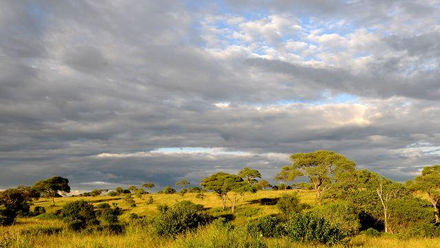 Zdjęcia: Tarangire ,  Tarangire , ***, TANZANIA