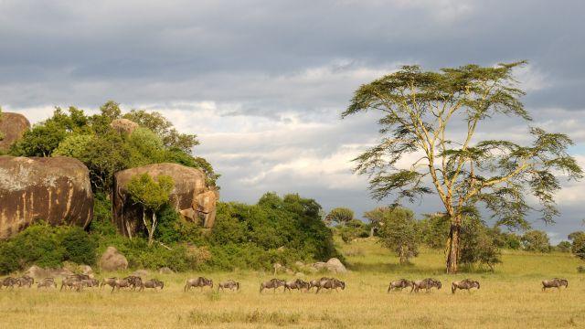 Zdjęcia: Serengeti, Serengeti, ***, TANZANIA