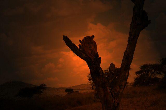 Zdjęcia: sawanna, Serengeti, zmierzch na Serengeti, TANZANIA