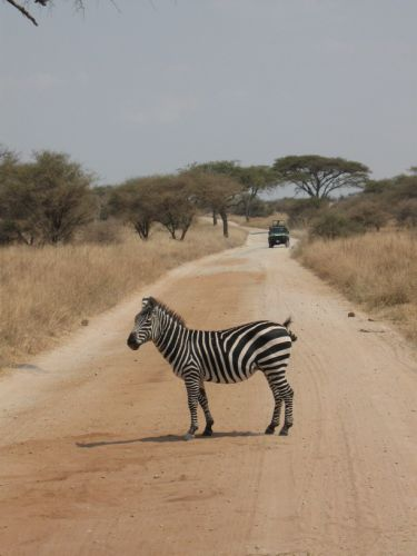 Zdjęcia: sawanna, NGORONGORO, i jeszcze jedno, TANZANIA