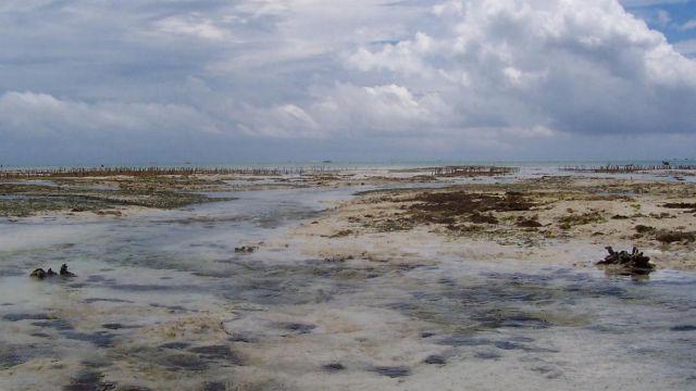 Zdjęcia: Jambiani, Zanzibar, odpływ, TANZANIA