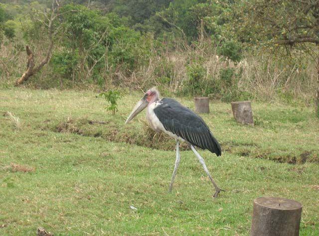 Zdjęcia: Ngorongoro, Wartownik, TANZANIA