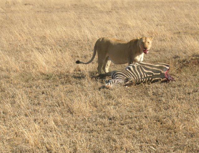 Zdjęcia: Serengeti, Śniadanie, TANZANIA