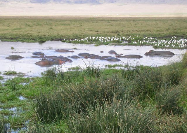 Zdjęcia: Ngorongoro, Basen kąpielowy w Ngorongoro, TANZANIA