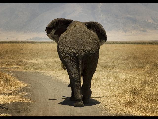 Zdjęcia: Ngorongoro, Mam wszystko w ...., TANZANIA