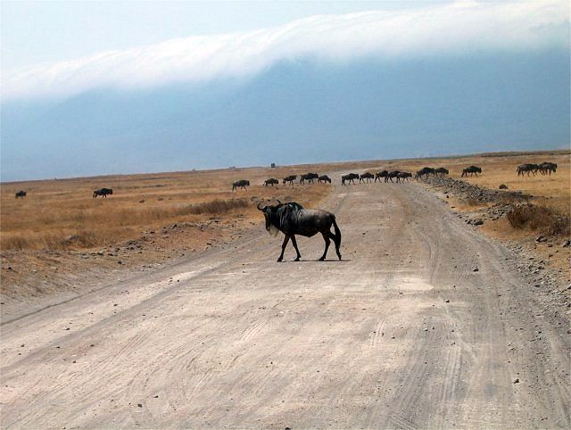 Zdjęcia: Krater Ngoro Ngoro, Serengeti, Gnu, TANZANIA