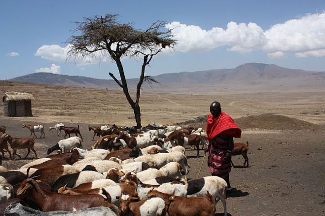 Zdjęcia: Gdzieś w Tanzanii, Masajskie życie, TANZANIA