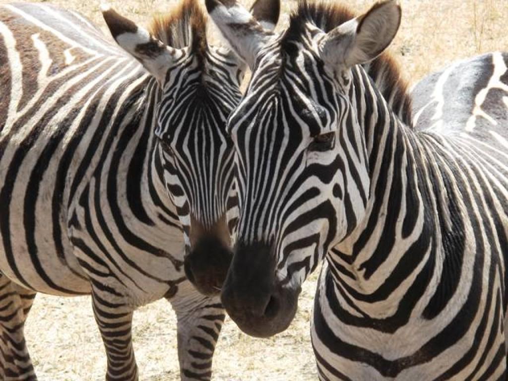 Zdjęcia: Ngorngoro, Aruha, Kalejdoskop, TANZANIA