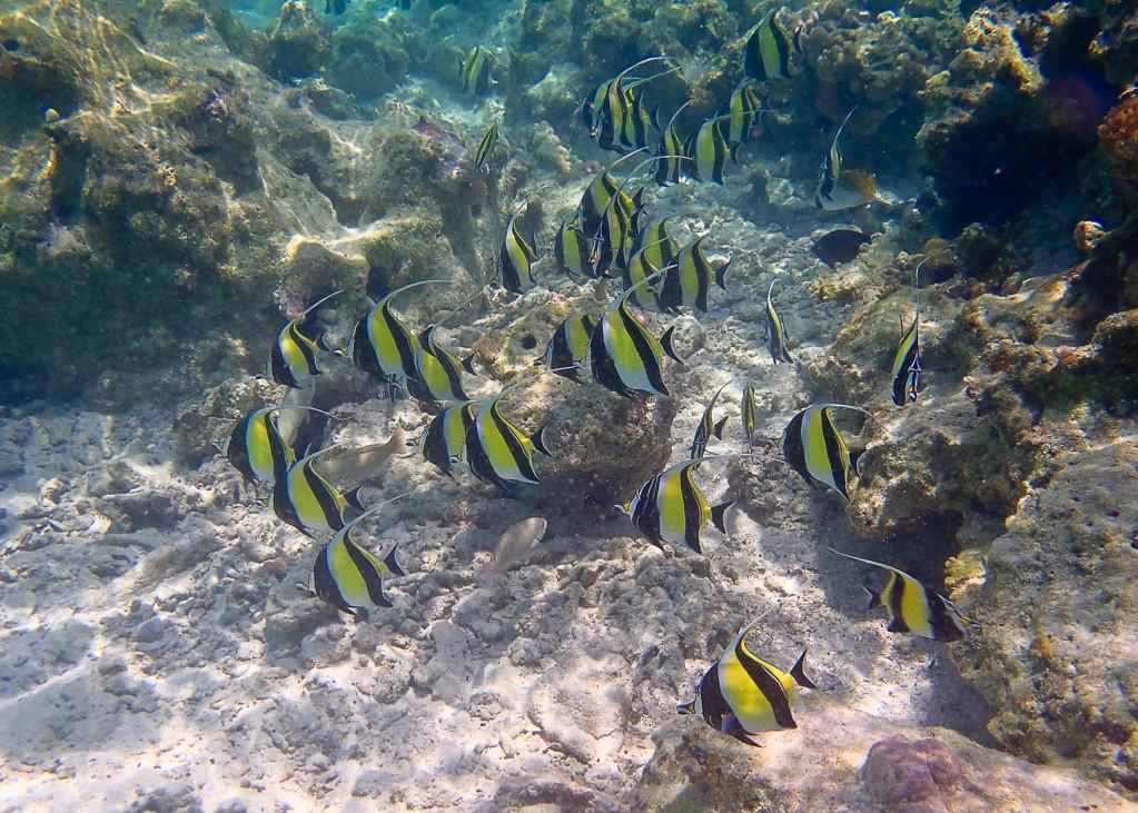 Zdjęcia: pod wodą :-), Zanzibar, Skalarki, TANZANIA