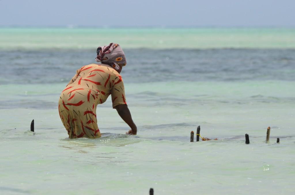 Zdjęcia: Paje Beach, Zanzibar, Trudy życia codziennego, TANZANIA