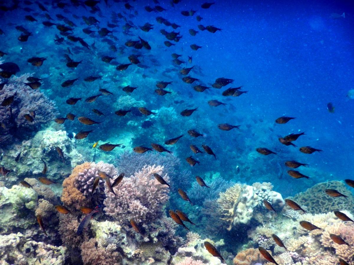 Zdjęcia: okolice Wyspy Mnemba, Ocean Indyjski, Zanzibar, Pod wodą, rafa, TANZANIA