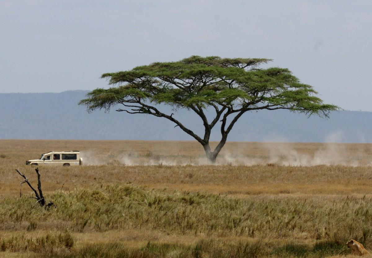 Zdjęcia: Gdzieś na Serengeti, Serengeti, Znajdziesz lwicę na tym zdjęciu?, TANZANIA