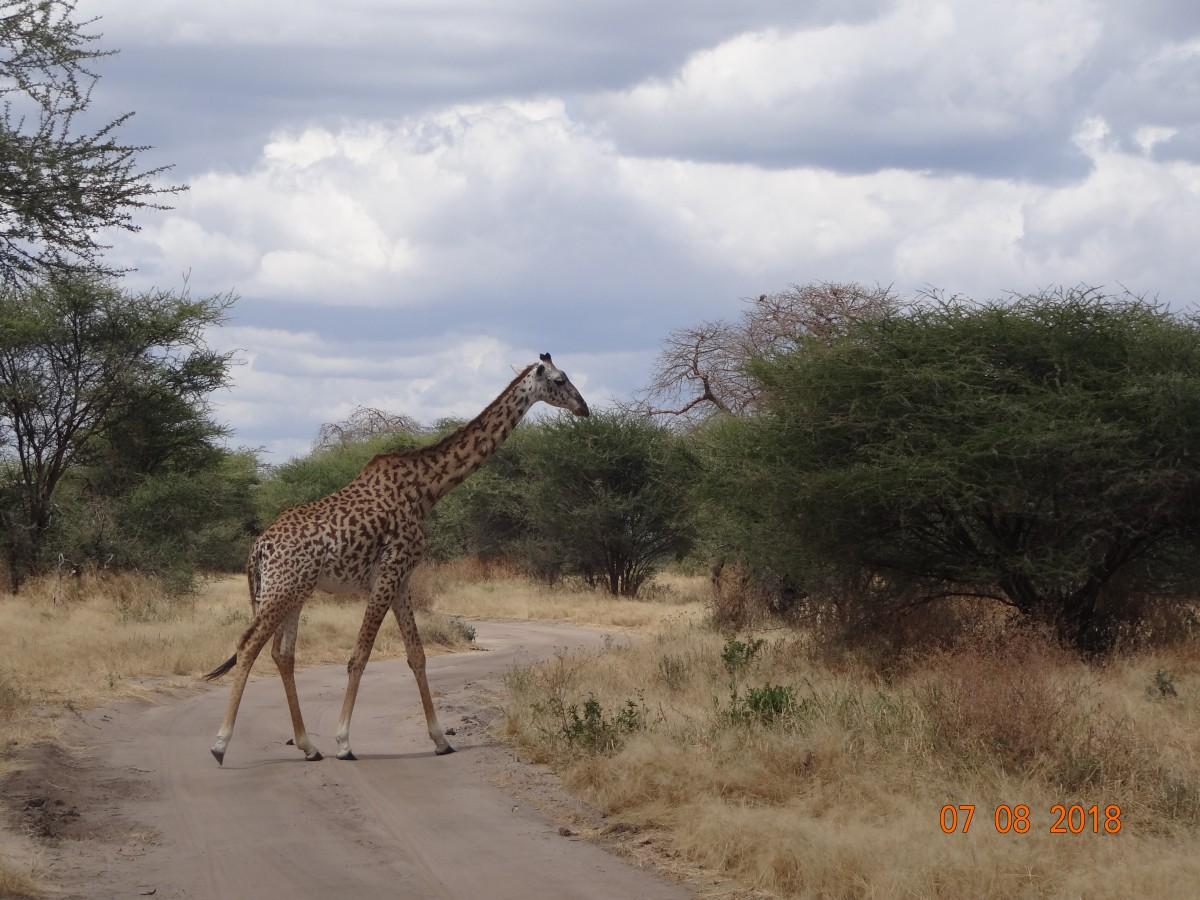 Zdjęcia: Tarangiri, Tarangiri, W krainie Baobabów, TANZANIA